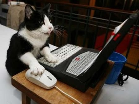cat20typing